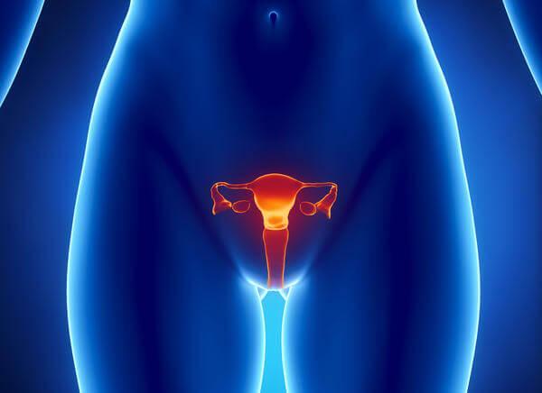 Репродуктивная система женщины 3D модель