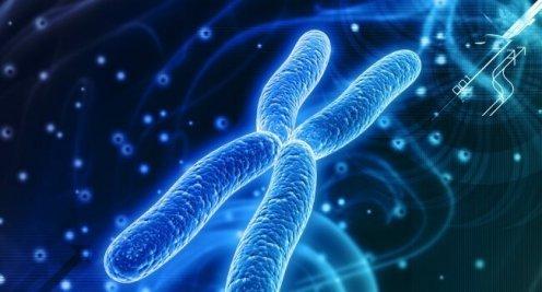 Изменения числа хромосом